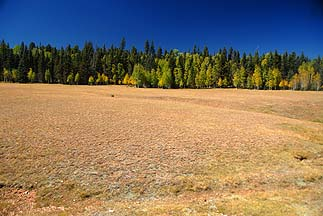 Kaibab Plateau meadow, September 25, 2010