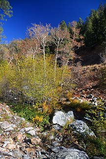 Oak Creek Canyon, November 11, 2013