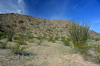 Sonoran Desert National Monument, January 28, 2014
