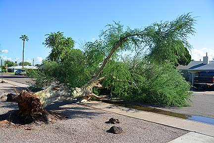Scottsdale Storm Damage, September 28, 2014