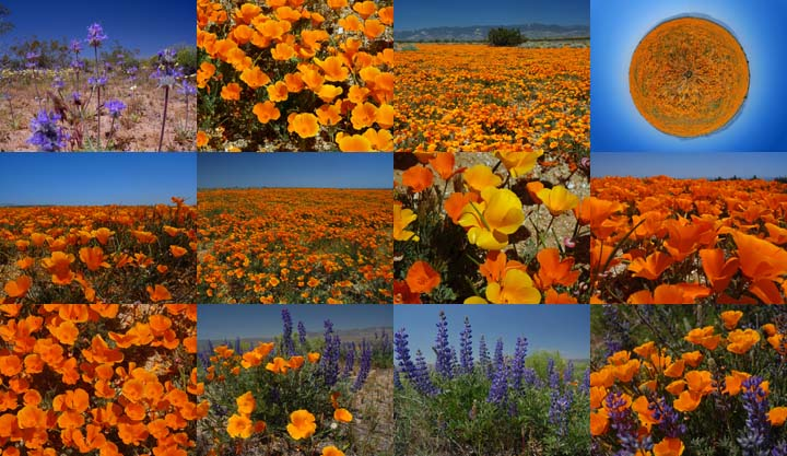 Goleta air and space museum antelope valley wildflowers lockett books calendar catalog antelope valley wildflowers mightylinksfo