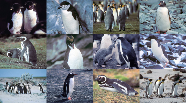 Lockett Books Calendar Catalog: Penguins
