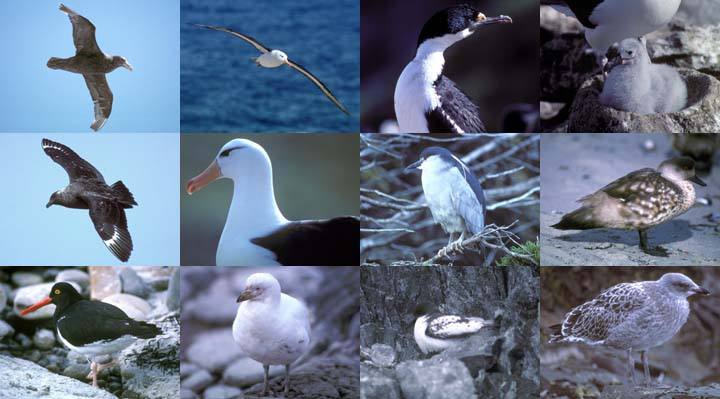 Lockett Books Calendar Catalog: Birds of the South Atlantic and Antarctica