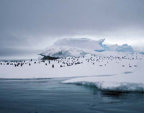 Lockett Books Print Catalog: Adelie Penguins, Antarctica