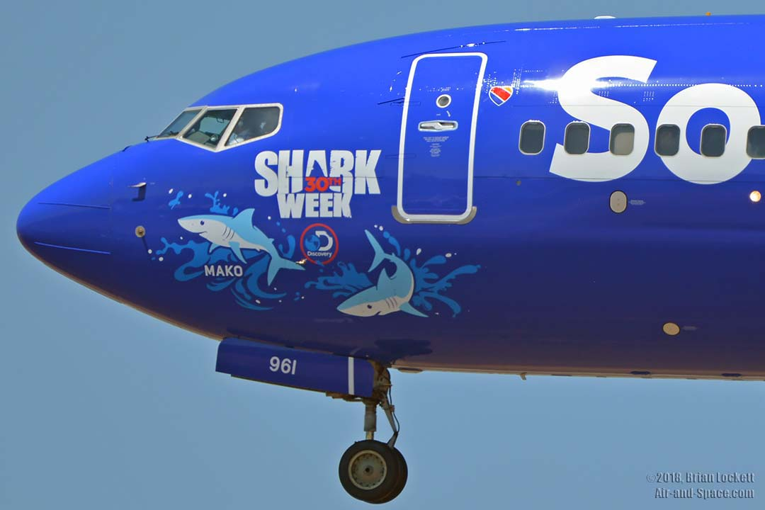 southwest shark week sweepstakes air and space com southwest shark week mako at phoenix 3803